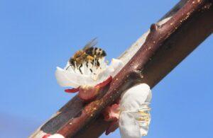 Infobrief der Bieneninstitute 2021-3
