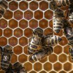 2021 gibt es kaum Schweizer Honig