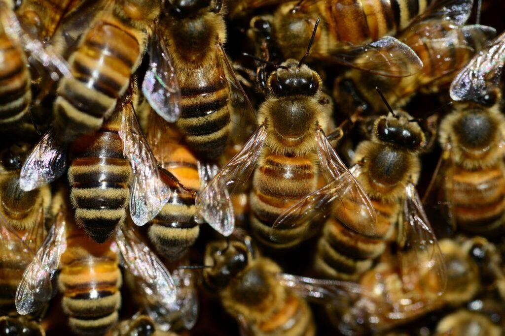Bienen gross