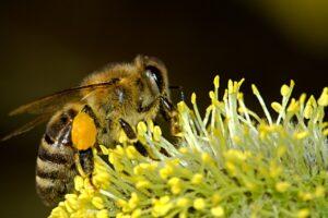 Read more about the article Bienenprodukte sind ein wahres Superfood