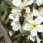 Infobrief der Bieneninstitute 2021-7