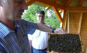 Imkerverein: Bienen ohne Leistungsdruck