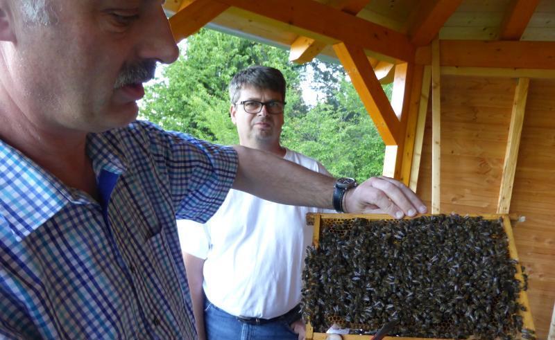 You are currently viewing Imkerverein: Bienen ohne Leistungsdruck