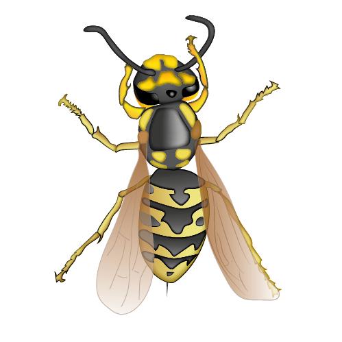 Wespe Logo rund
