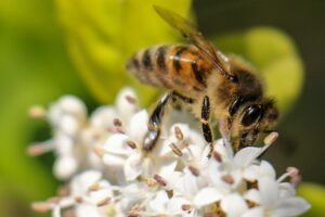 Read more about the article Weltbienentag 20. Mai