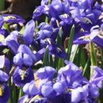 Imkerliches Blühphasenmonitoring