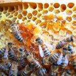 Heimischer Honig wird im Kreis Lörrach zur Rarität