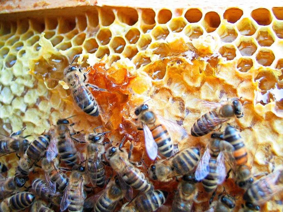 You are currently viewing Heimischer Honig wird im Kreis Lörrach zur Rarität